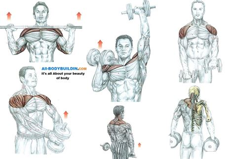 5 Awesome Shoulder Muscle Exercises ~ multiple fitness
