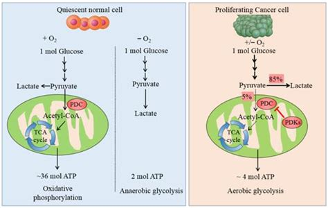 Targeting Tumor Metabolism for Cancer Treatment: Is