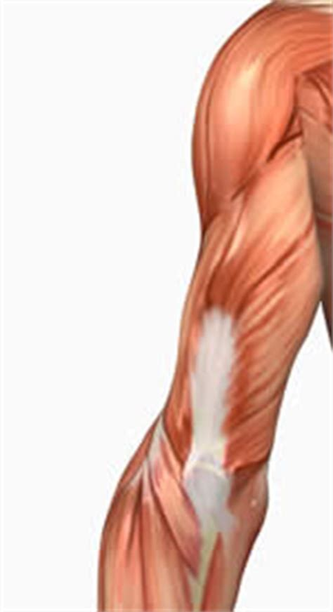 Over 40 Tricep Exercises for Women with Anatomy and